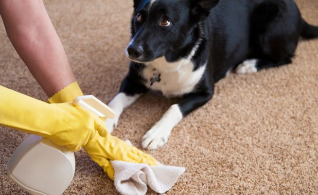pet accident cleaning vancouver